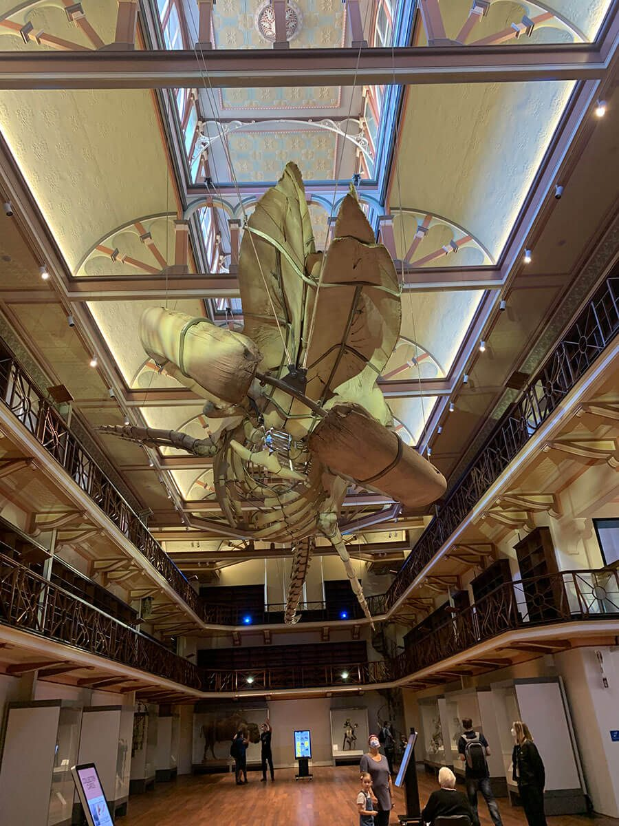 best-things-to-do-in-perth-western-australia-museum